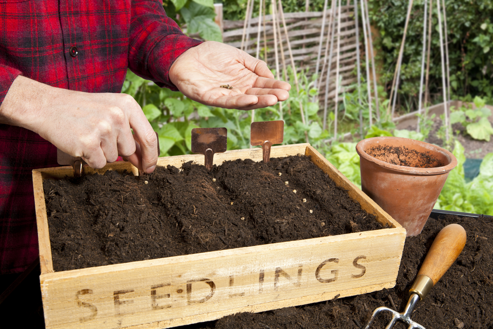 Create Kitchen Garden Create Your Own Kitchen Garden March Pentland Plants News