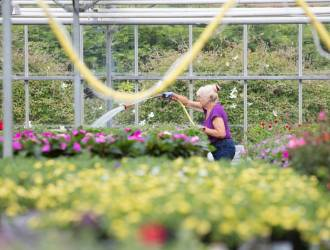Seasonal nursery staff job opportunity