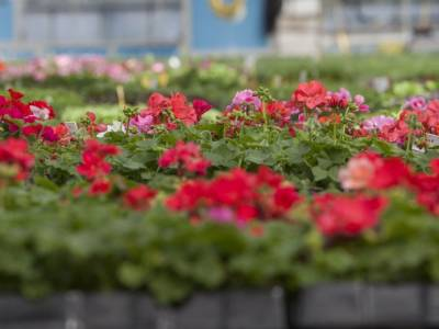 This weeks exciting plant offers