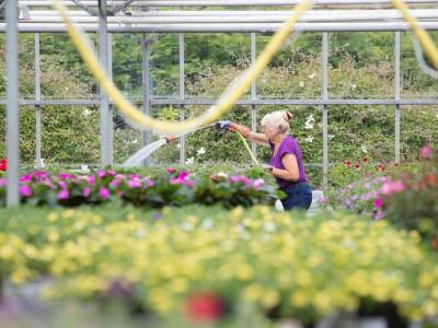 2017 plant trials at Pentland - FREE event