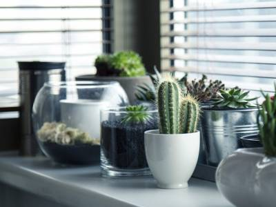 NEW IN! House plants