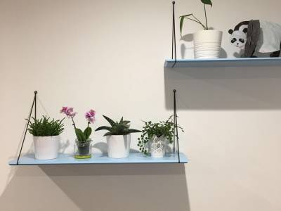 First Garden: Houseplants bring the outside in