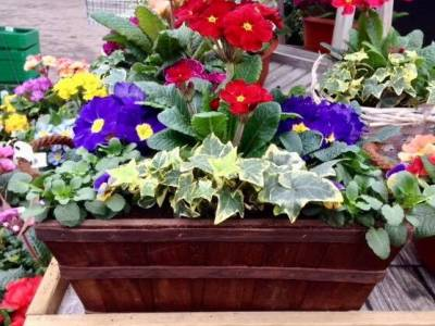 Spring planted containers available now!