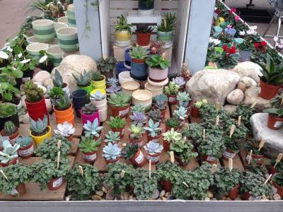 New range of house plants