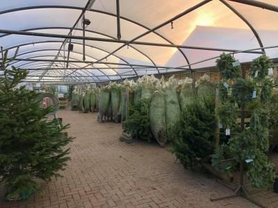 Hand pick your real Christmas tree